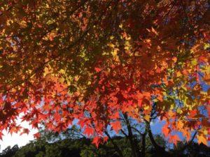 水屋神社の紅葉